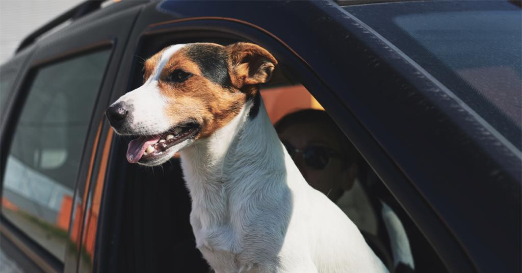 Como transportar seu pet no carro com segurança?